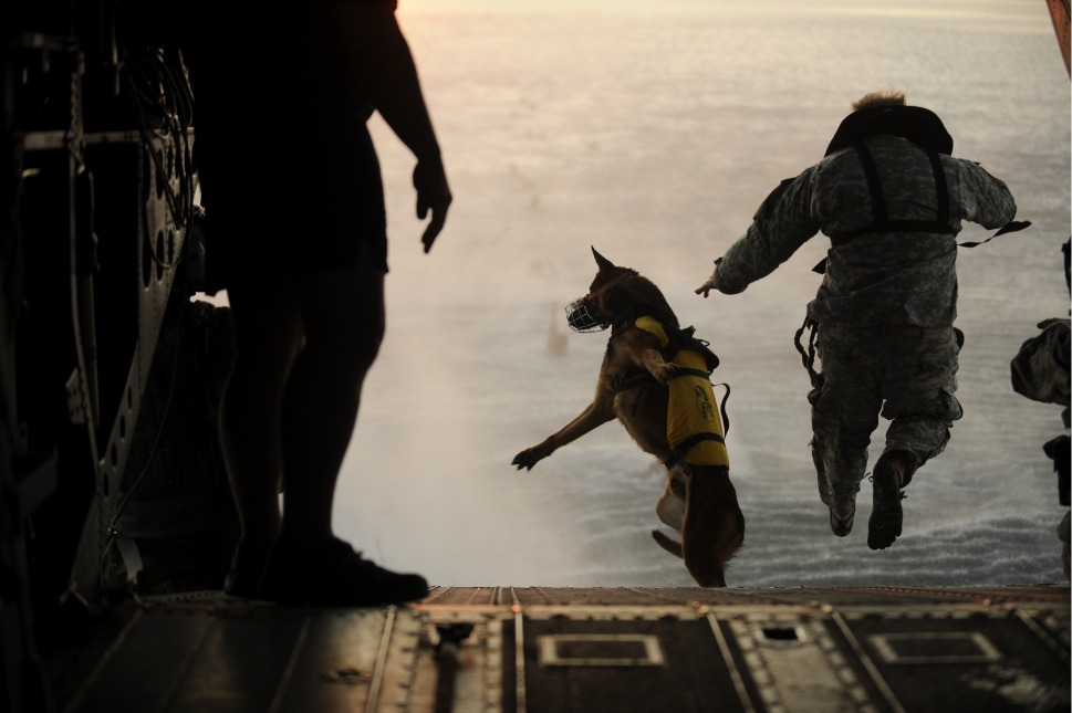 Image Result For Navy Seal Dog