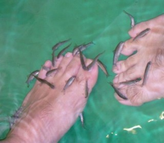 Flesh eating fish latest pedicure trend health science for Fish eating dead skin pedicure