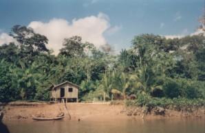 House on Amazon Basin Wikipedia Commons