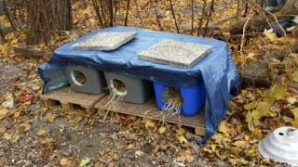 GOR feral cat shelters