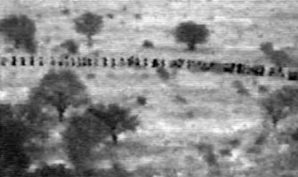 Hundreds of illegals sneak into the U.S. everyday. Pictured here: Infrared image at border.
