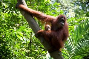 Boreo Rainforest Project L