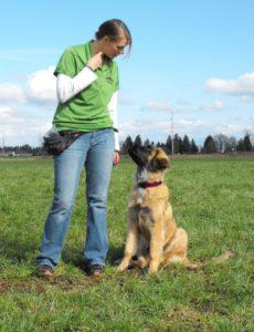 Vision Dog Training School Hayle