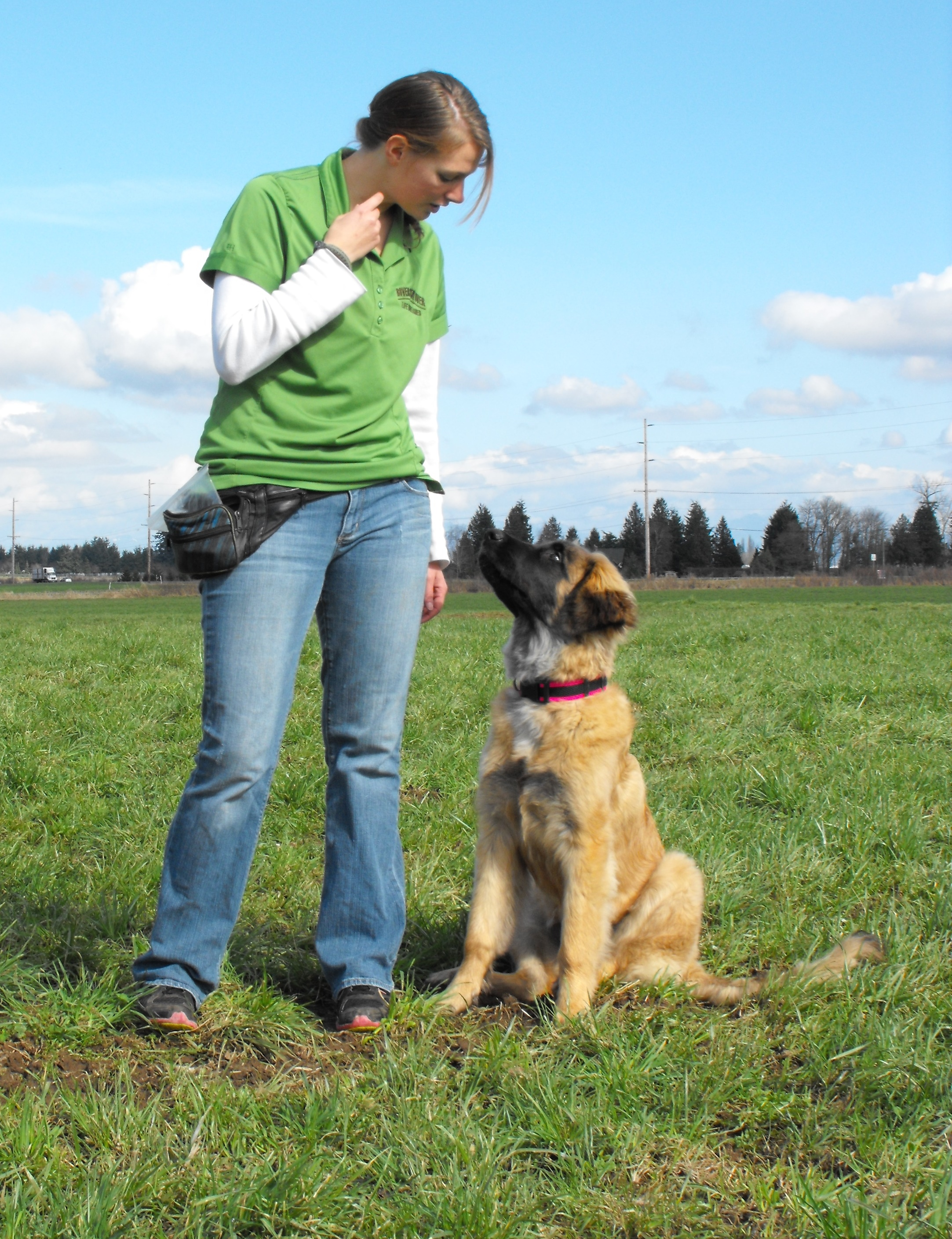 Image Result For Dog Obedience Training