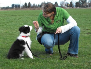 Puppy Training at Rover Stay Over - Photo by Patti Rowlson