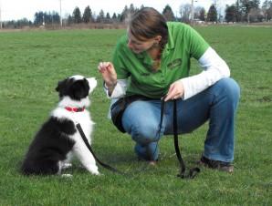 Dog Training Plus Peoria Il