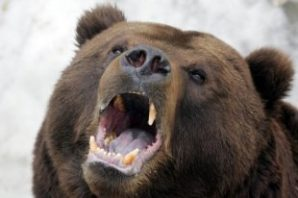 Russian bear.