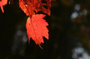 As cooler weather covers the eastern USA, leaves change into bright colors