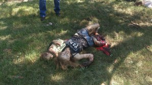 Civilians (mother and infant child) killed by bombing by Kiev backed Ukrainian troops.