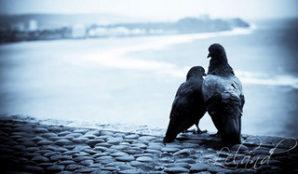 5476372784_f067181a09_n God Loved the Birds